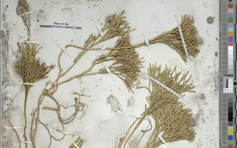 如何将人工神经网络与自然历史科学想结合