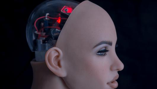 完美机器人伴侣