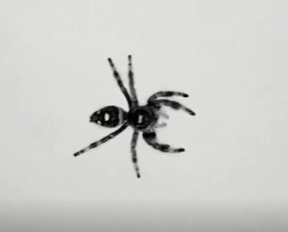 从昆虫获取灵感设计仿生机器人