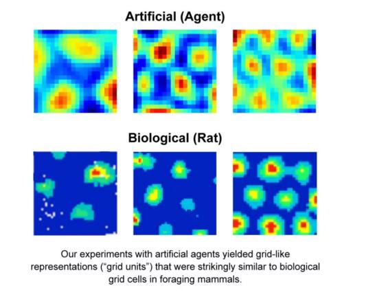 DeepMind研究:AI复现大脑网格细胞模拟导航