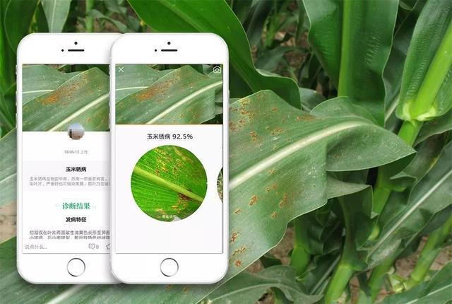 今年玉米病害重发,人工智能将成防治主力!