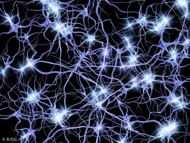 谷歌研究员创建AI地图 全面了解大脑的新方式