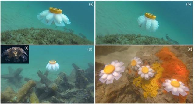为更好保护和研究珊瑚礁 科学家研发软体机器人