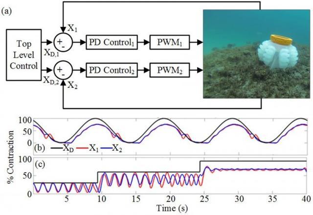 「图」为更好保护和研究珊瑚礁 科学家研发软体机器人