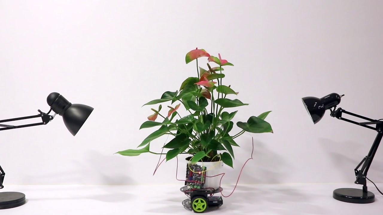 麻省理工正研究植物机器人 让植物自主控制机器人