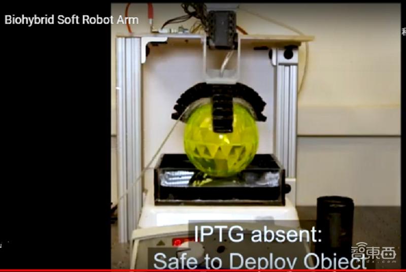 """美国大学研发新型机器人夹持臂,能""""尝""""出物体的化学物质"""