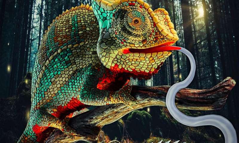 美国普渡大学研发快动作软体机器人,灵感来自变色龙舌头捕食