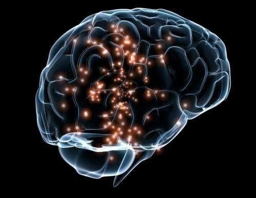 深度神经网络揭示了大脑喜欢看什么